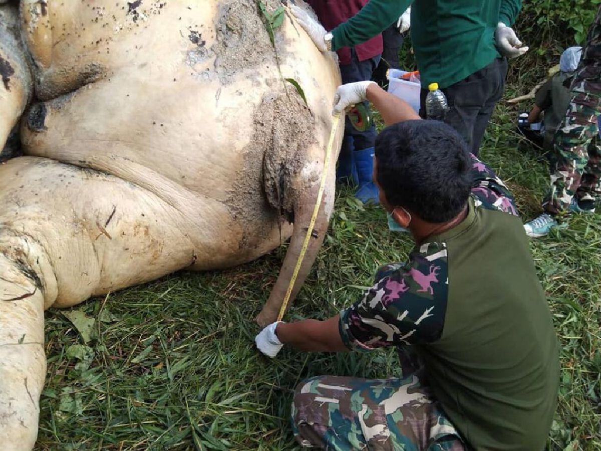 สุดสลด! พบซากช้างป่าไม่มีหัว-ปลายหาง คาดถูกคนร้ายฆ่าเพื่อเอางา