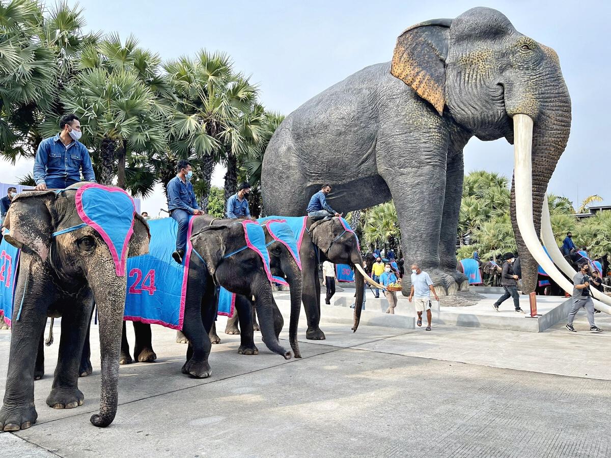 ช้างแสนรู้เต้นแอโรบิค ให้กำลังใจผู้ที่ได้รับผลกระทบโควิด-19