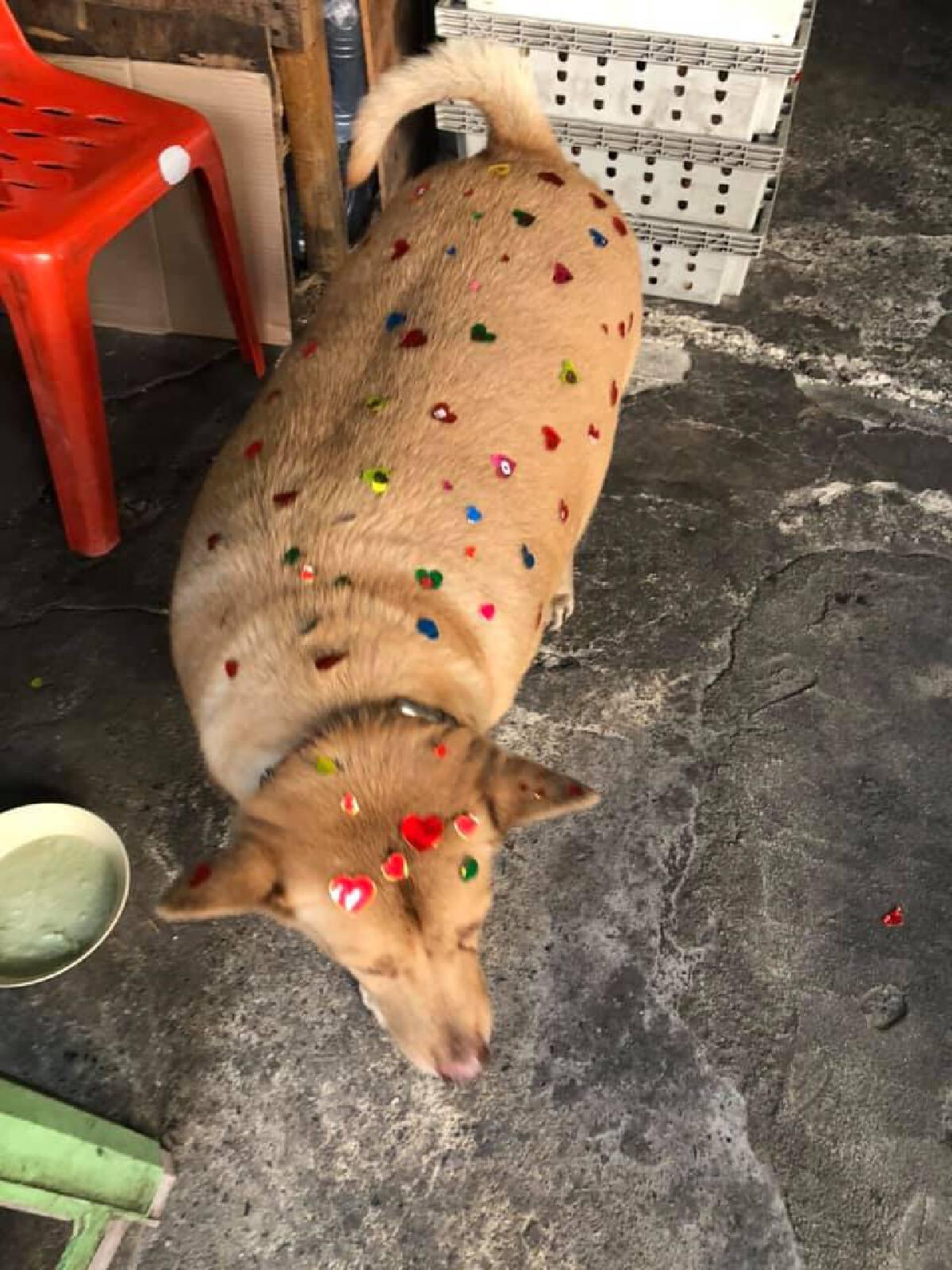 โซเชียลแห่แชร์ภาพ หมาอ้วนถูกติด