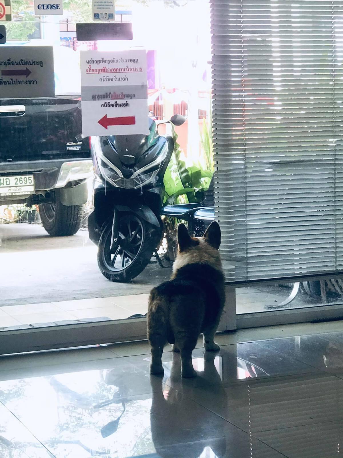 สาวใจบุญ! ประกาศหาเจ้าของ สุนัขพันธุ์