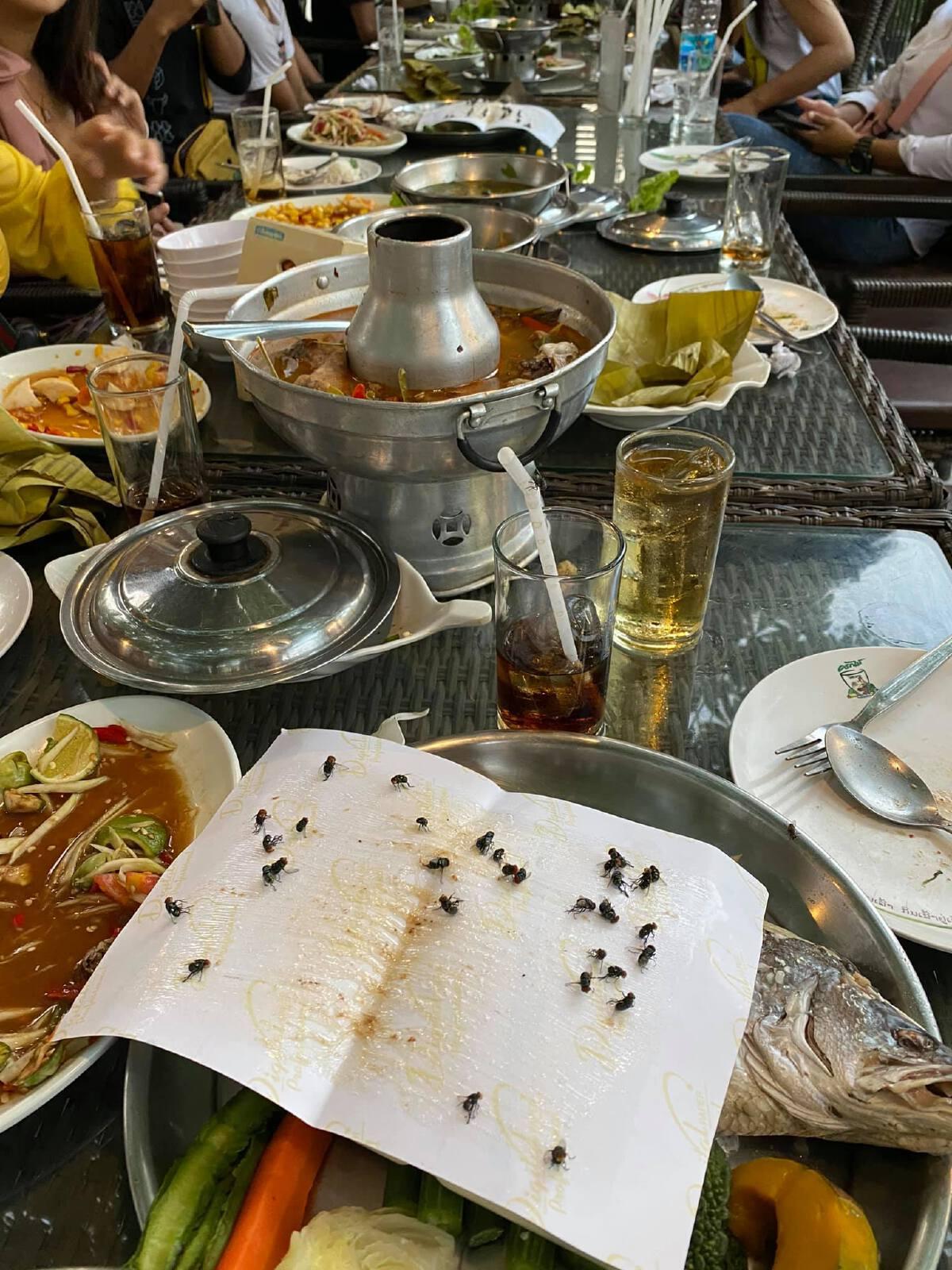 หนุ่มโวย ร้านส้มตำชื่อดัง แมลงวันเพียบ แถมเอาที่ดักมาวางไว้บนโต๊ะ