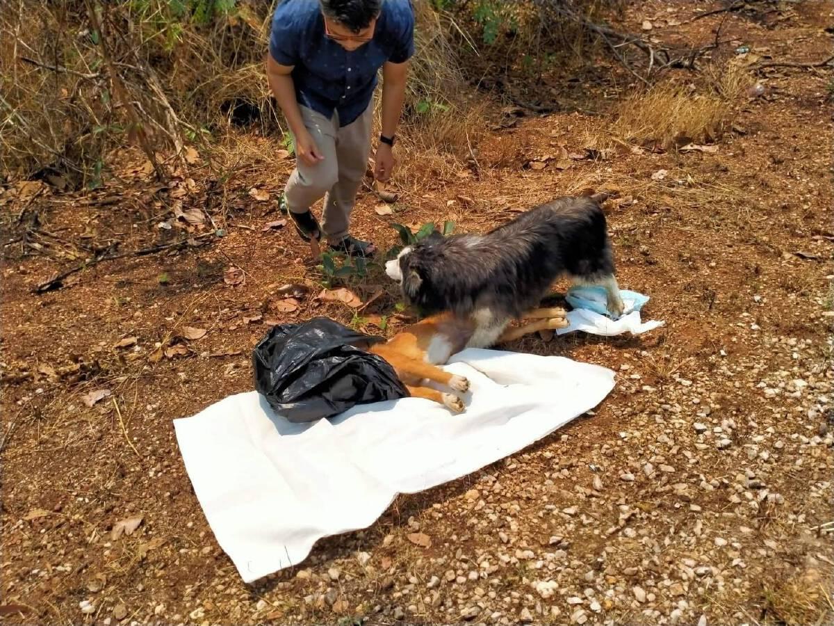 สุดเศร้า สุนัข 2 ตัว นั่งเฝ้าศพเพื่อนถูกรถชนไม่ยอมห่าง