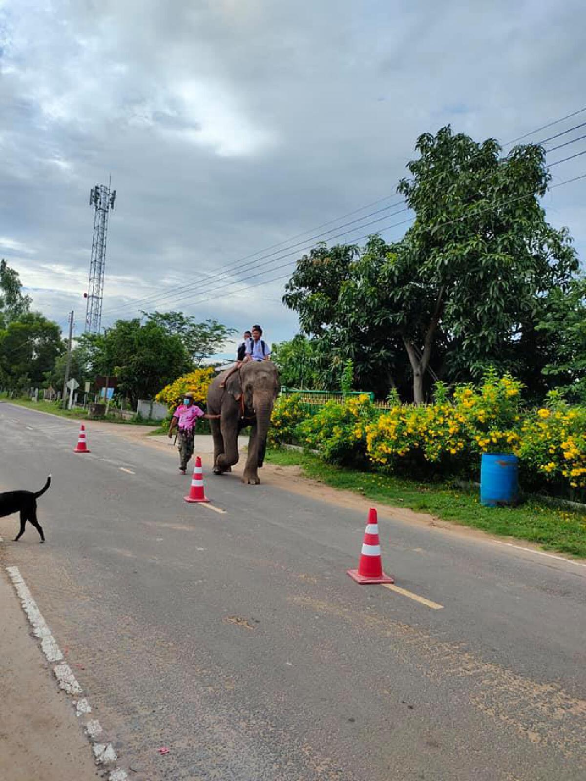 ขี่ช้างไปโรงเรียน