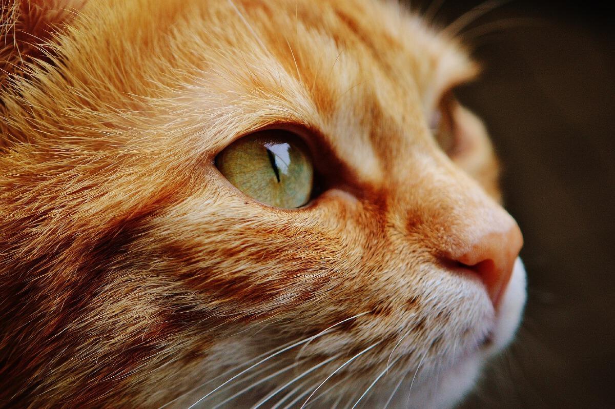 cat88