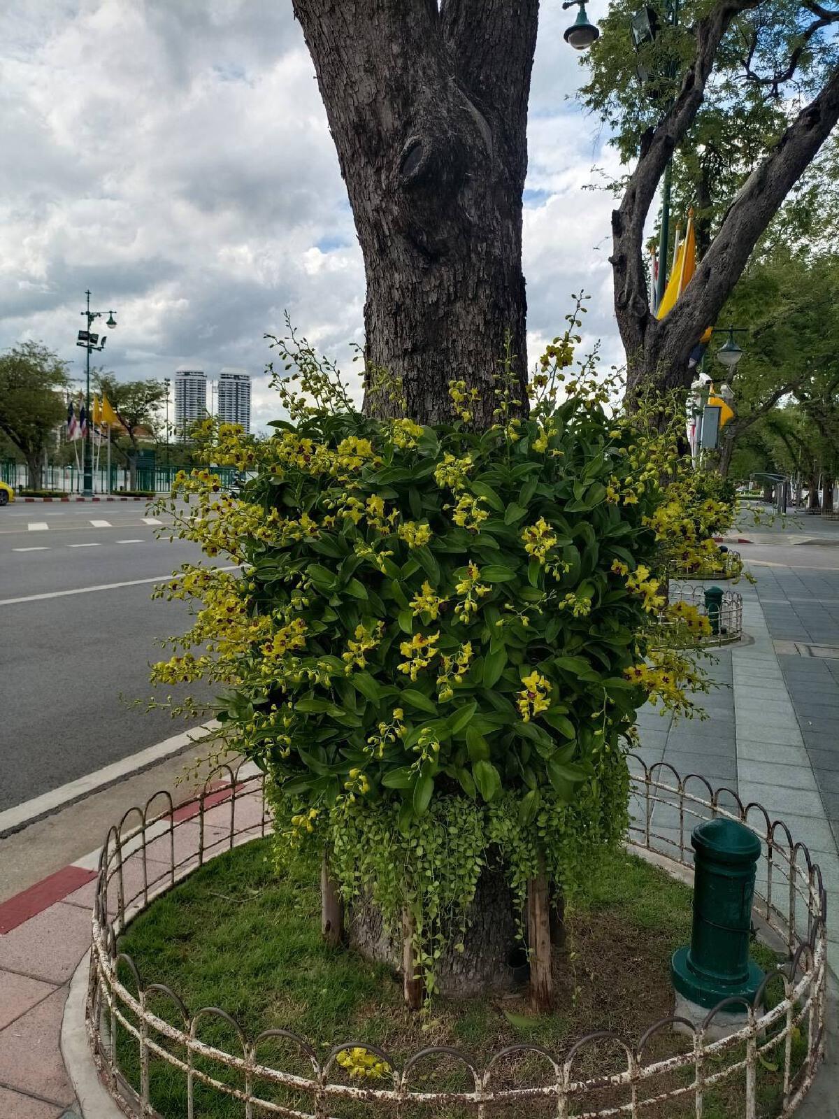 กทม.ประดับไม้ดอกแต่งเมือง 2 แสนต้น-ไฟสวยงาม วันเฉลิมพระชนมพรรษา ร.10
