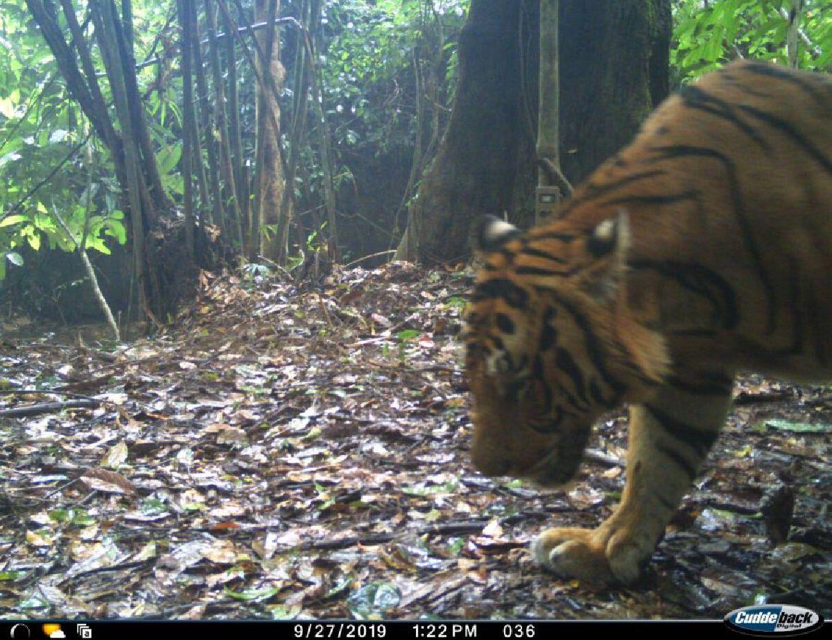 ข่าวดีสำหรับคนไทยทั้งประเทศ! กลุ่มป่าแก่งกระจาน ขึ้นทะเบียน มรดกโลก