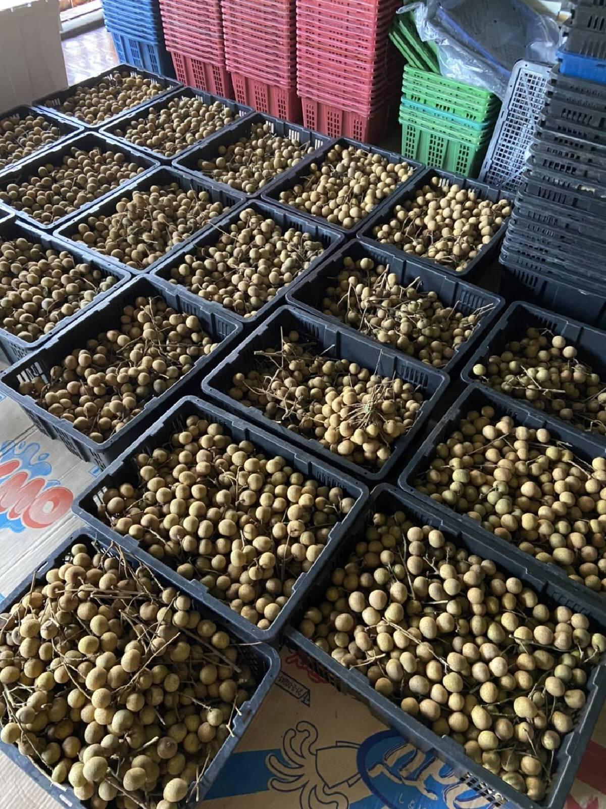 โตโน่ ภาคิน ช่วยเกษตรกร เหมาผลไม้ 4 ตัน แจกจ่ายชุมชน-รพ.สนาม