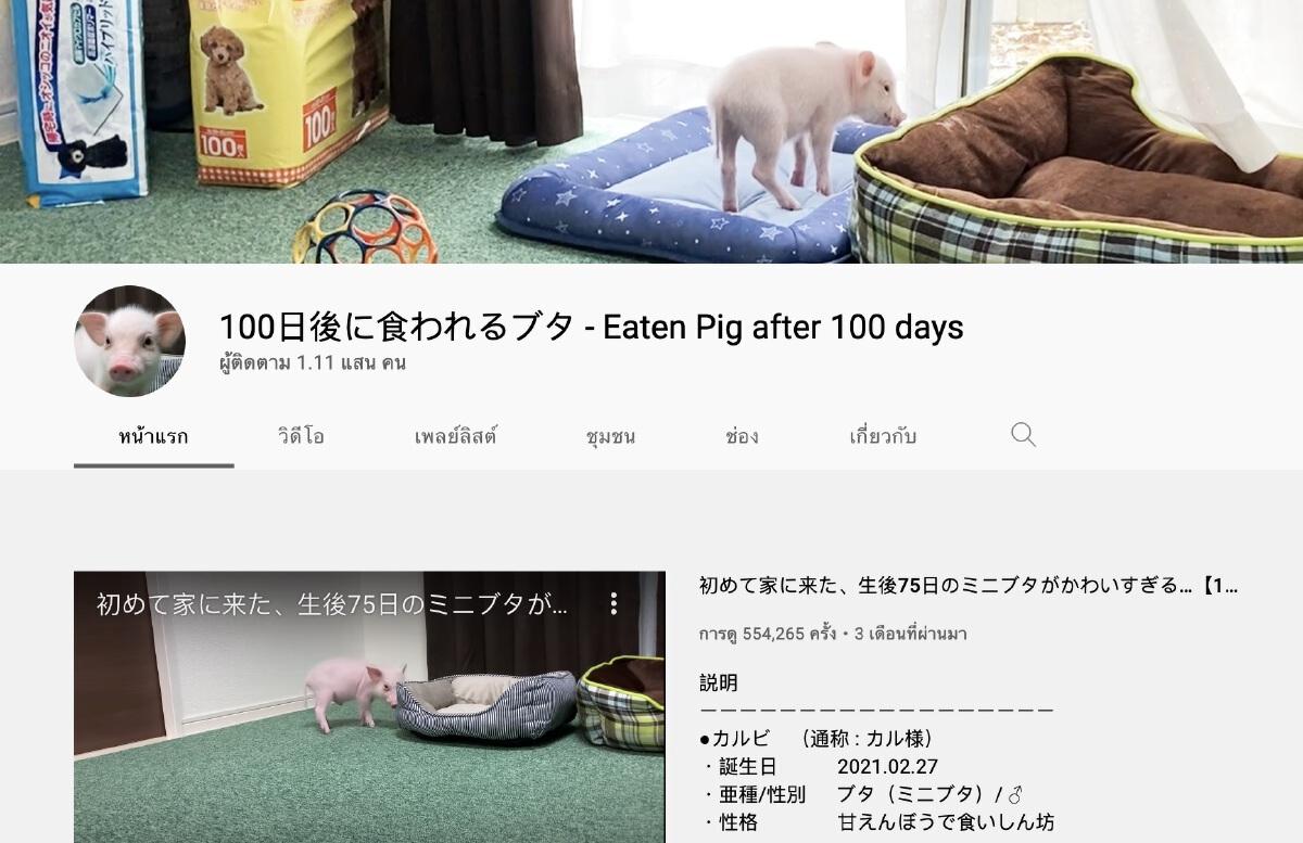 """ยูทูปเบอร์ญี่ปุ่น """"ทำคลิปเลี้ยงหมู 100 วัน"""" ก่อนปิดฉากคลิปสุดท้ายสุดเศร้า"""