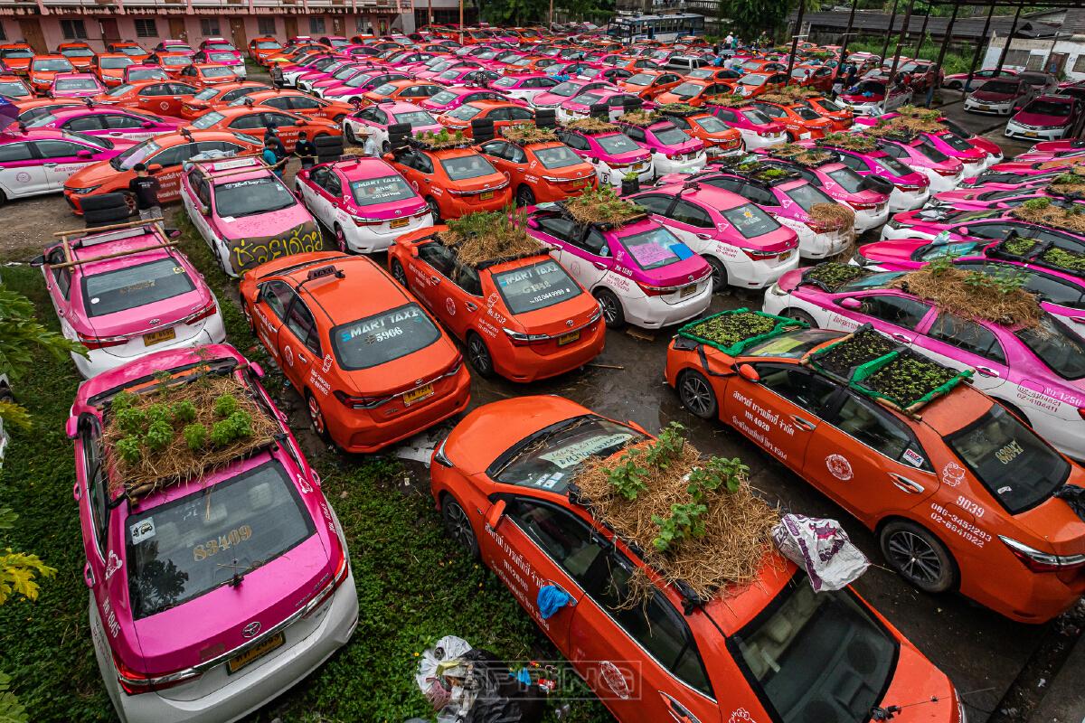 ผลกระทบโควิด-19 อู่แท็กซี่ผลุดไอเดีย เปลี่ยนรถแท็กซี่เป็นแปลงผัก เลี้ยงกบ