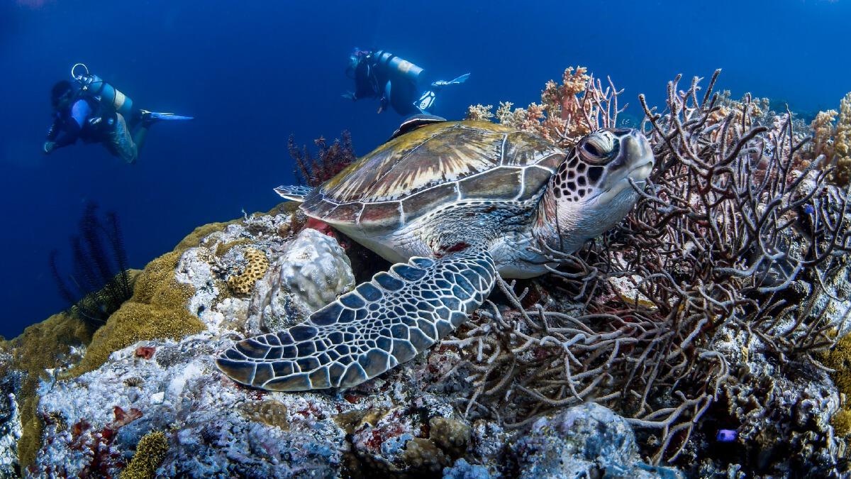ปะการังเป็นแหล่งที่อยู่อาศัยของสัตว์หลายสายพันธุ์ ทั้งหลบซ่อนจากอันตราย เป็นบ้าน เป็นแหล่งหาอาหาร