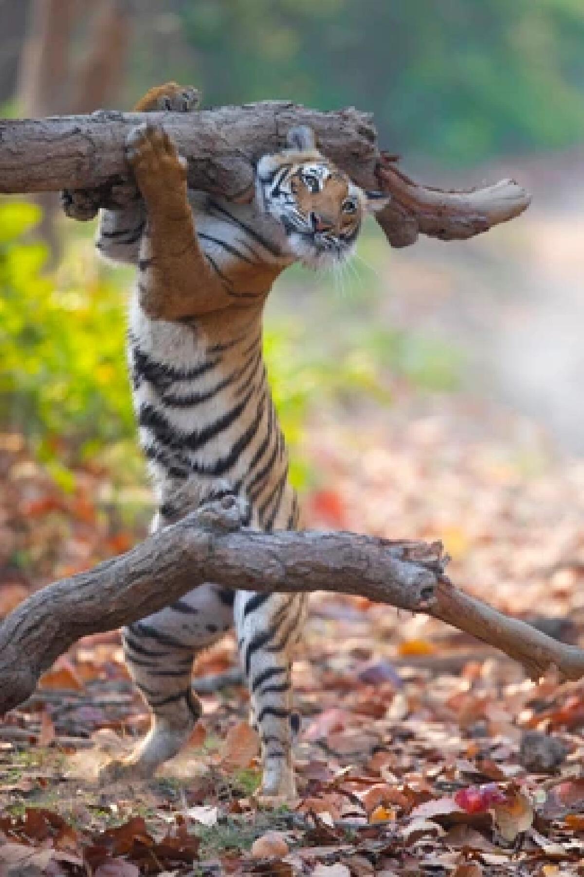 ต้นไม้ล้มขวางทาง ต้องจัดการซะหน่อย โดย Siddhant Agrawal (India)