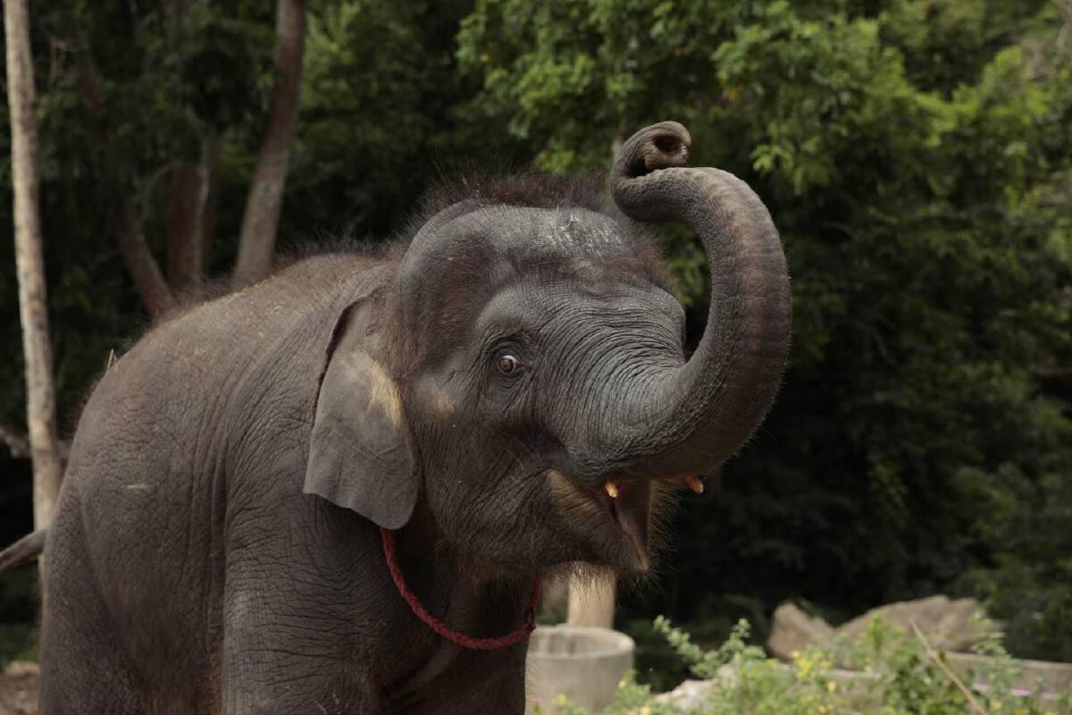 ช้างไทย ควรอยู่ที่ไหน