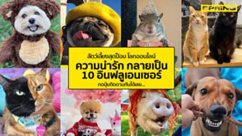 รวบรวม 10 สัตว์เลี้ยงน่ารัก สุนัข แมว อินฟลูเอนเซอร์ คว้าใจแฟนบนโลกออนไลน์