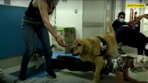 ชิลีใช้น้องหมา ช่วยบำบัดผู้ป่วยโควิด-19 เพื่อคลายความเครียด