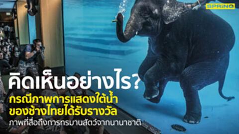 คิดเห็นอย่างไร กรณีการแสดงใต้น้ำช้างไทยถูกต่างชาติมองว่าทารุณกรรม