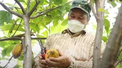 """โกโก้ """"ห้วยคต"""" เกษตรสูตรใหม่ ปฎิบัติดีมีมาตรฐานGAP"""